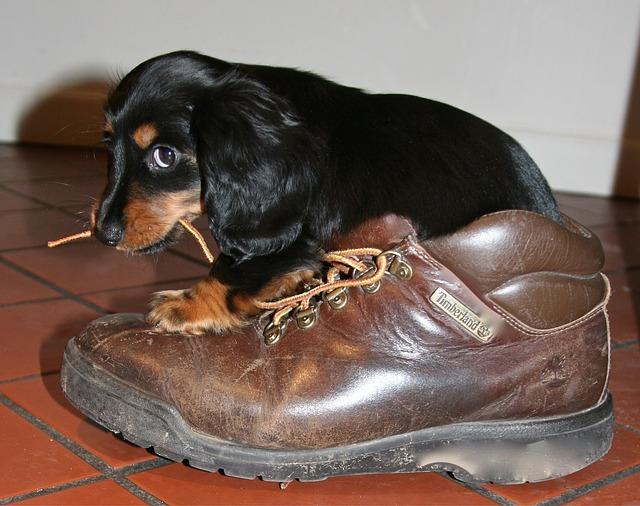 pes s botou