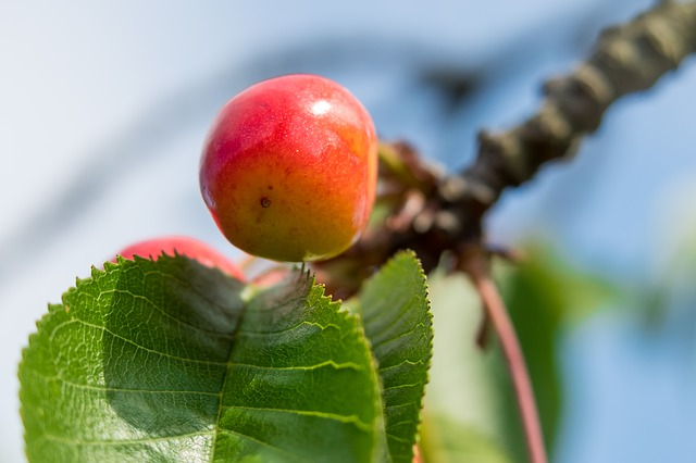 Červené jablko a zelené listy.jpg